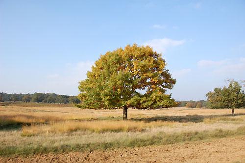 treeinsummer